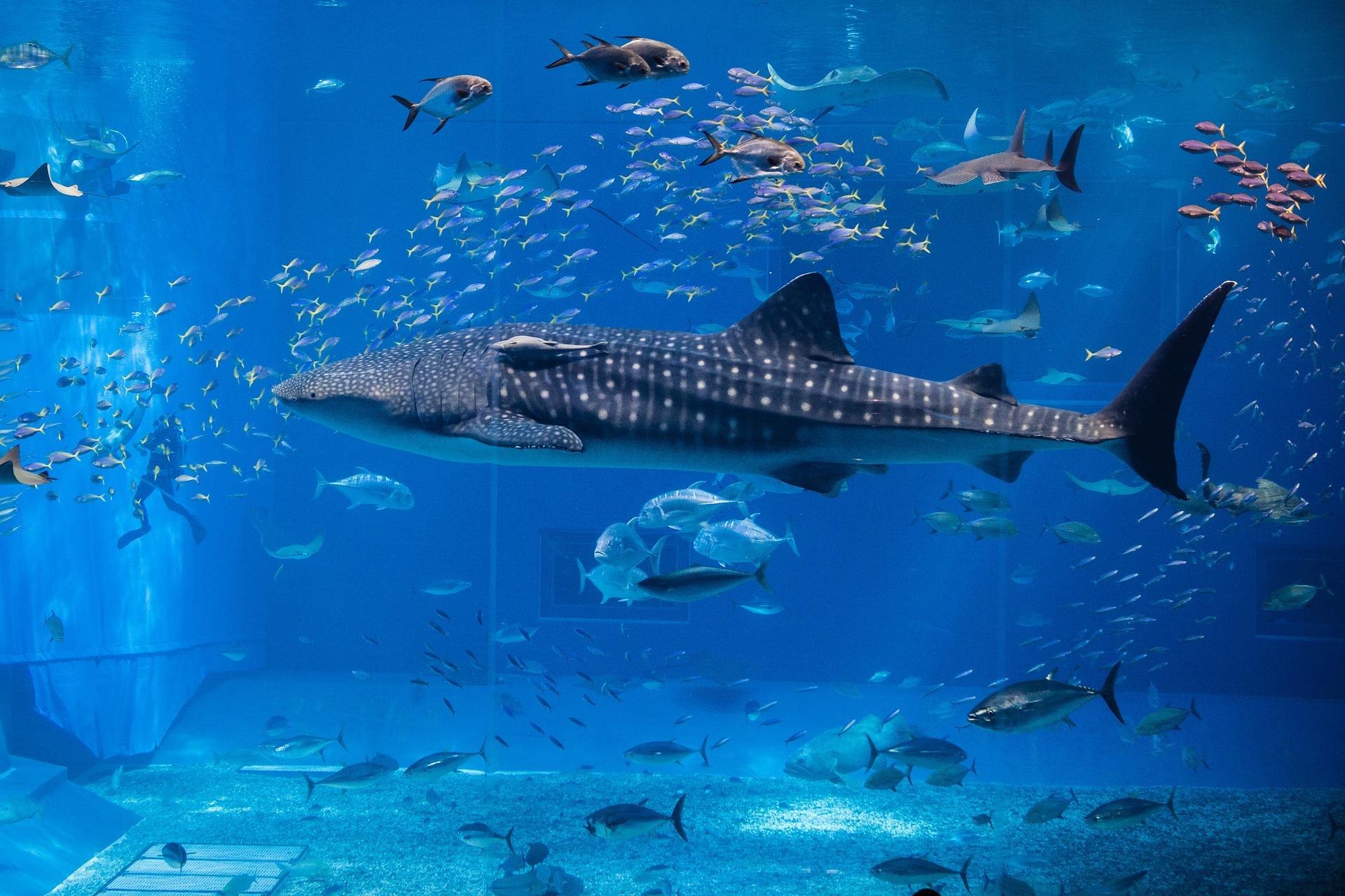 L'aquarium de Séville