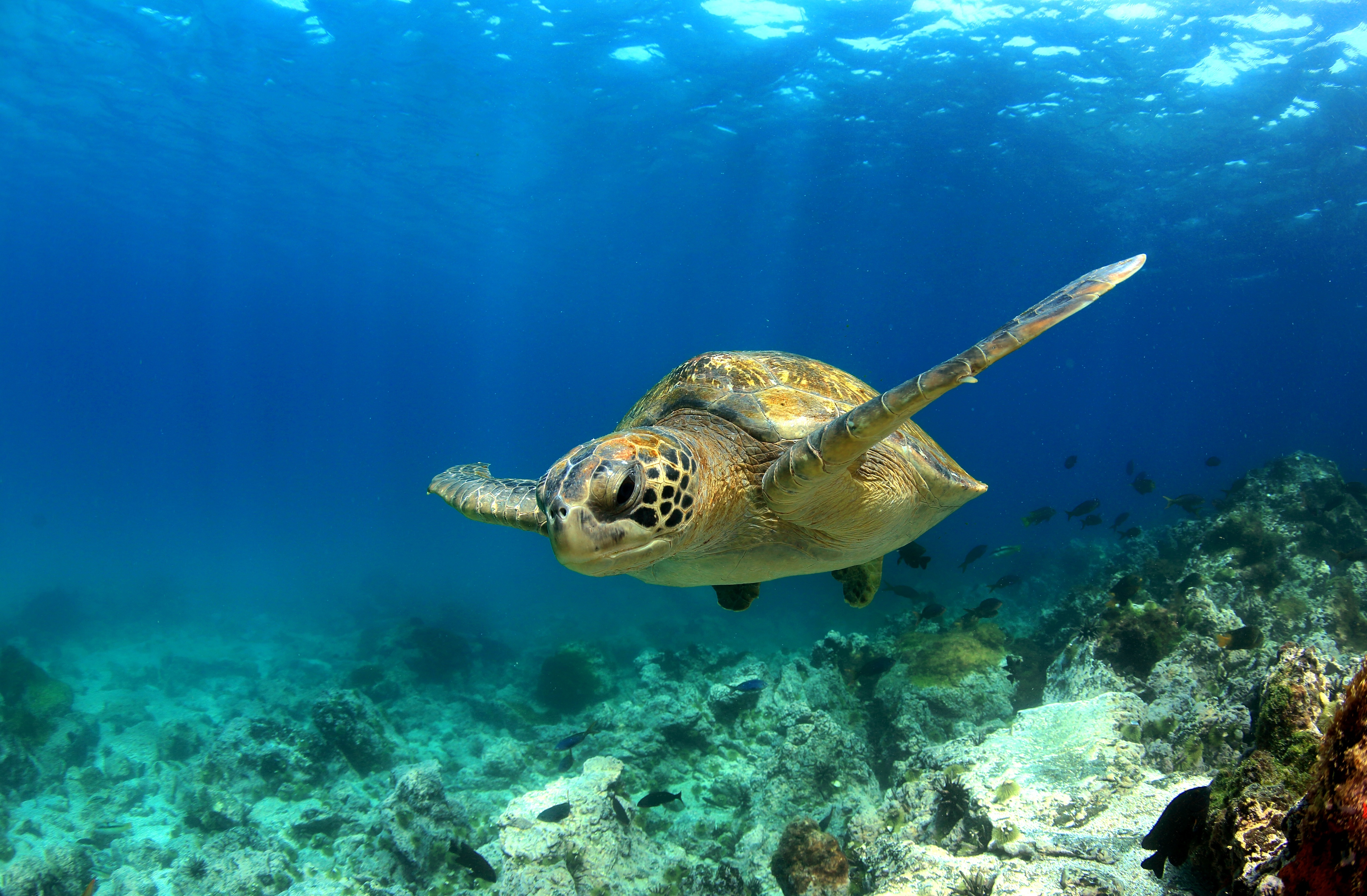 equateur tortues