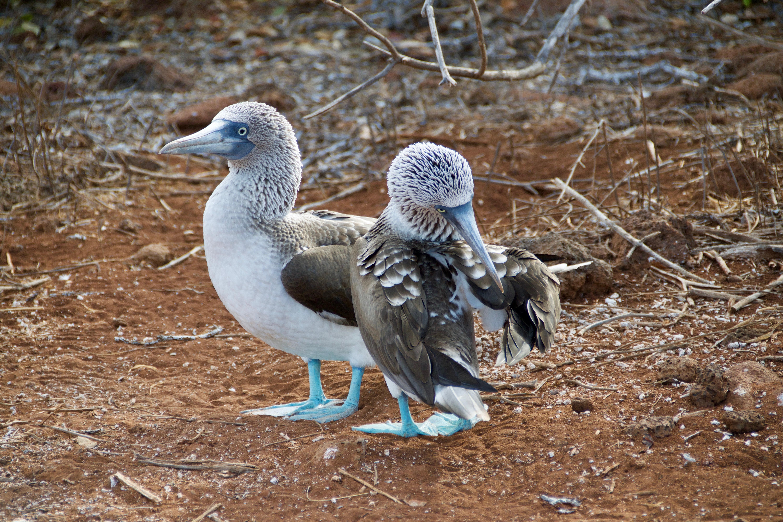 galapagos equateur