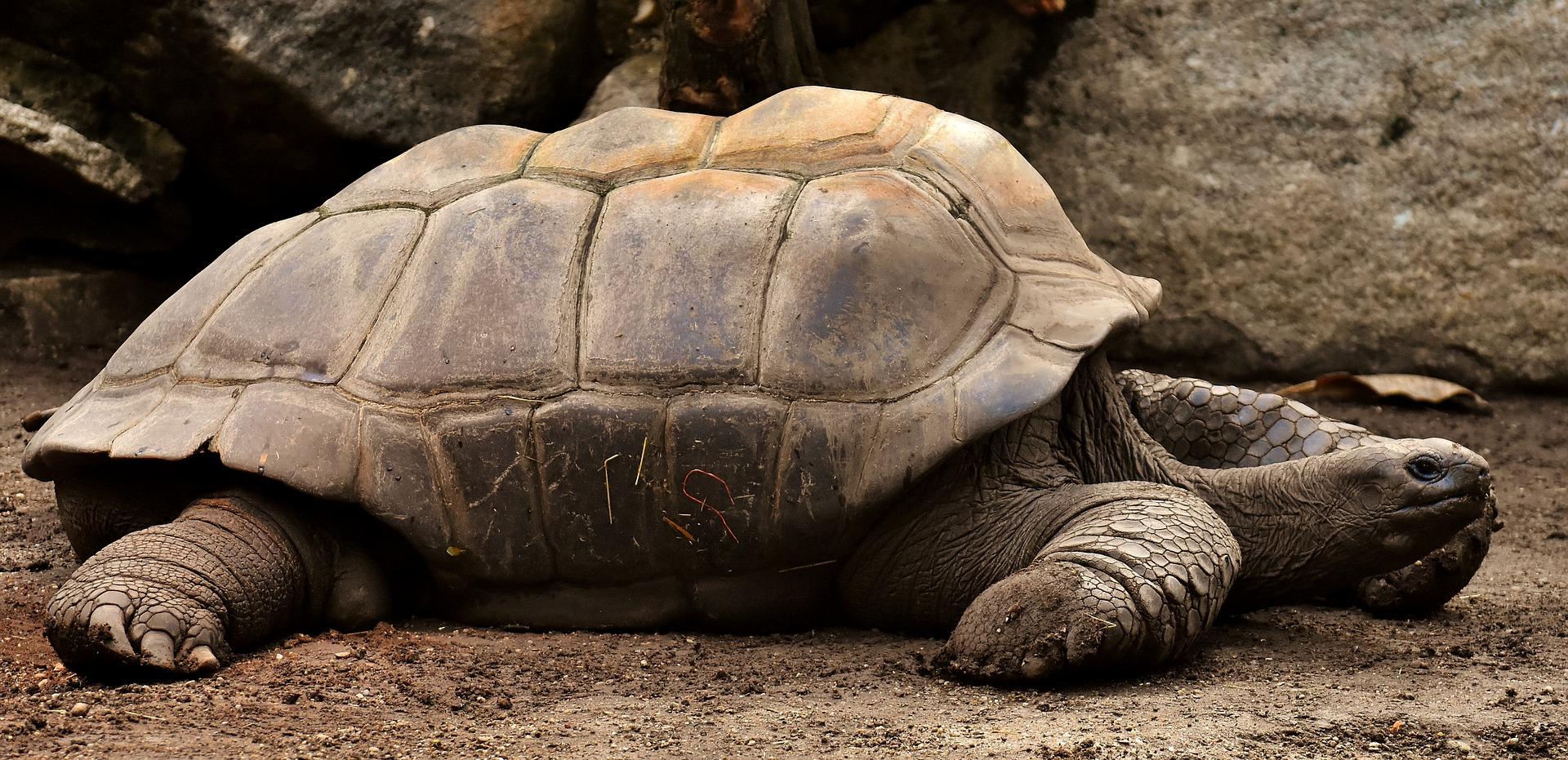 tortues galapagos equateur
